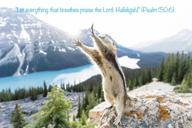 Squirrel stretching, Alberta, Canada  - 06 Jun 2015